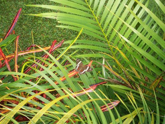 El Cafetal Inn: beautiful vegetation and butterflies