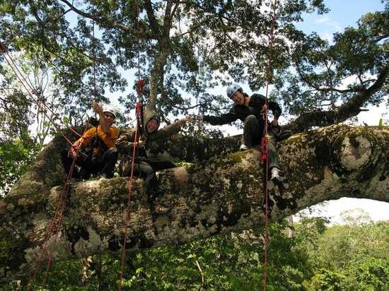 Amazon Tree Climbing: Chilling on the treetop