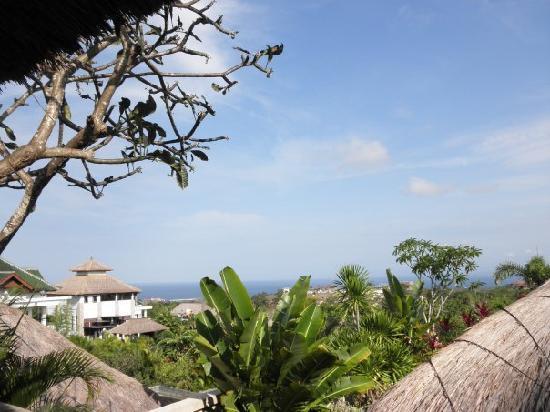 The DreamLand Luxury Villas & Spa: view from backyard