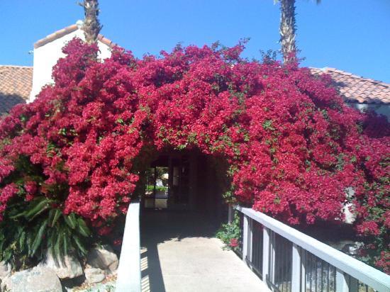 Oasis Villa Resort : Entrance to lobby