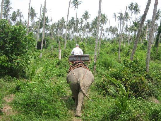 Big Easy: A zonzo nella giungla
