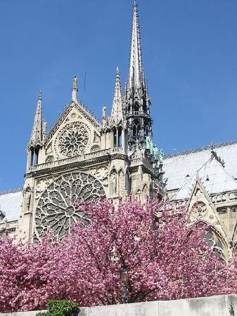 PARISCityVISION: Visite guidée de la Cathédrale Notre Dame