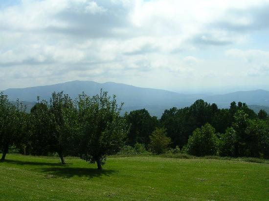 Big Lynn Lodge: One of the views
