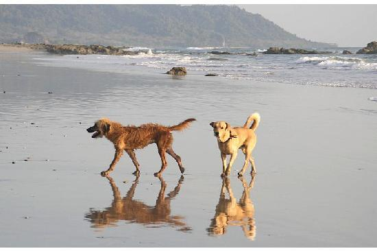Disfrutalo Ranchos y Villas : Some of the dogs, playing and running around on the beach
