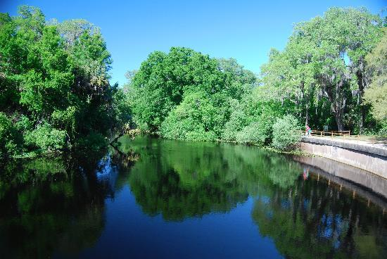 Hillsborough River State Park: the river