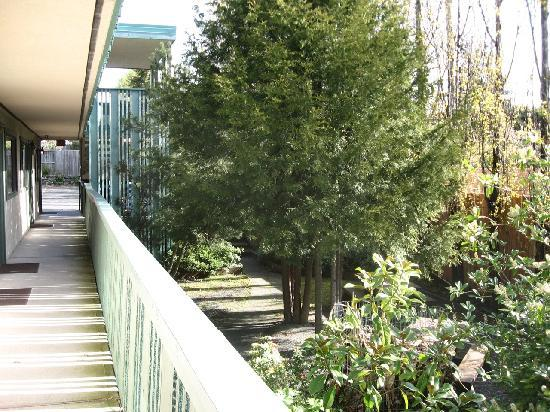 Robin Hood Motel: The garden at the rear, as seen from the 3-story wing's walkway.