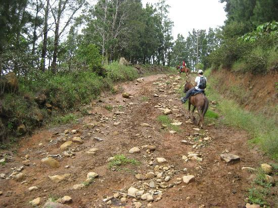 Sabine's Smiling Horses: Going up the steep, rocky hill