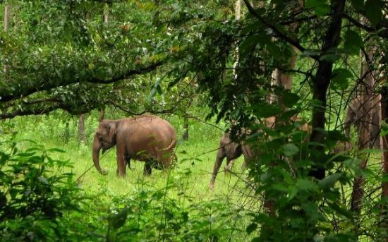Kalpetta, India: And I spotted a herd of wild elephants