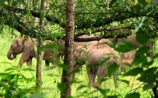 Kalpetta, India: No tusker in the herd though