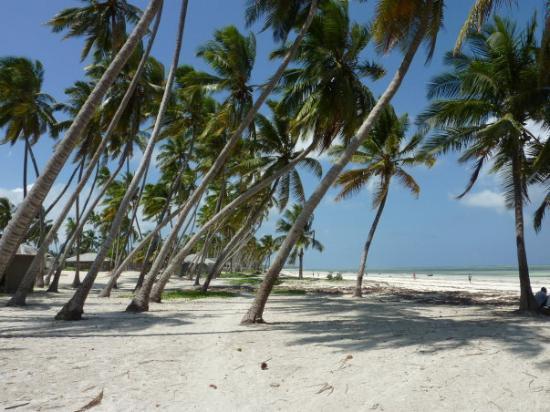 Zanzibar Island Photo