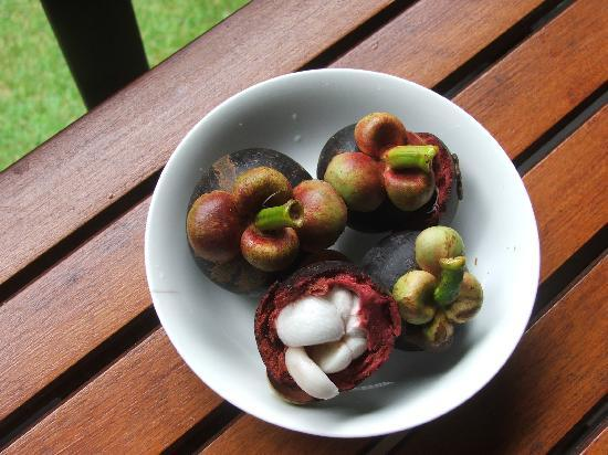 Red Mill House in Daintree: mangosteens