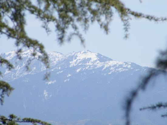 snow capped peaks from chail