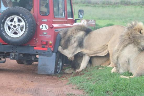 Nationaal Park Kruger, Zuid-Afrika: What the!