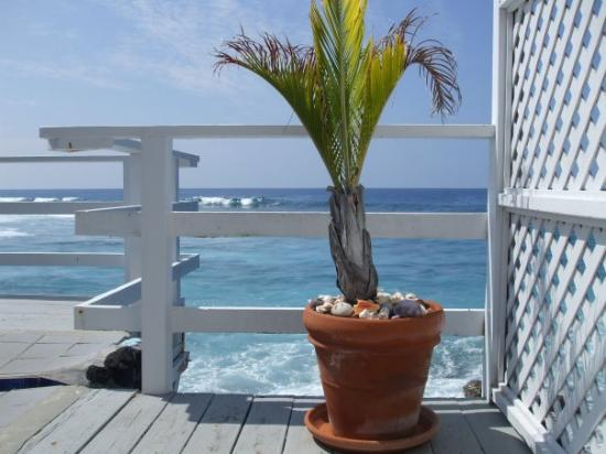 Каилуа-Кона, Гавайи: A baby palm living in paradise on the house deck.