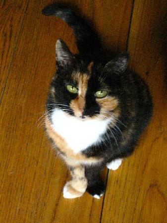 misc eatdrinksleep: Peru, the most adorable watch cat. . . LOVED HER TOO!