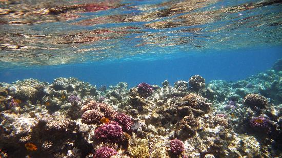 ابروتل مكادى بيتش: Coral reef.