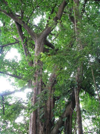 La Rosa de Los Vientos: Amazing Trees
