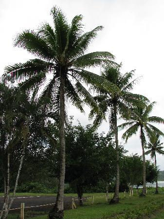 La Rosa de Los Vientos: coconuts dont get fresher