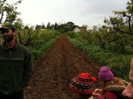 Goleta, CA: A walk with Toby through the farm