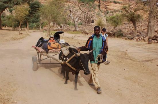 Bandiagara, Mali: Noah, Youssouf et son zébu durant les 5 jours de Treks en pays dogon Janvier 2009