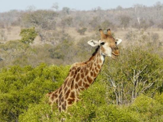 Krüger-Nationalpark, Südafrika: Kruger