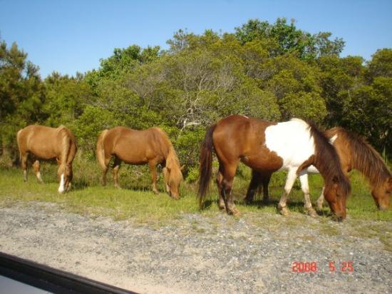 Ocean City Md Horse Island
