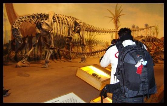 Drumheller - Alberta - CAnada - the worlds biggest collection of Dinasaur Bones found in the lit