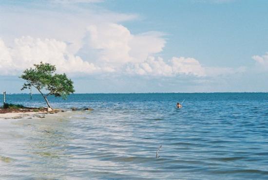 แทมปา, ฟลอริด้า: FL