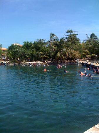 Chac Hal Al Condominiums: Dolphin in Puerto Aventuras