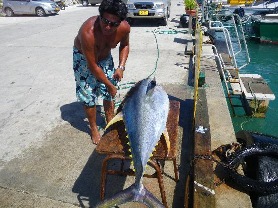 Captain Moko's Fishing Charters: Capt Moko about to fillet
