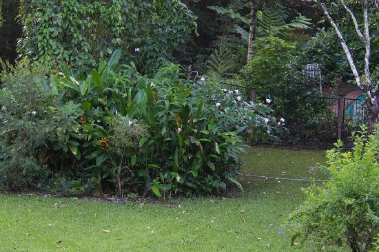Red Mill House in Daintree: Garden Red Mill House
