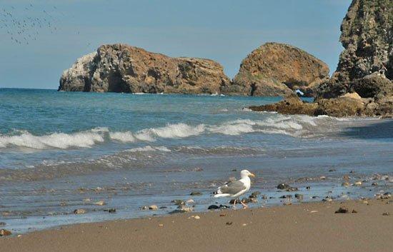 Σάντα Κρουζ, Καλιφόρνια: Santa Cruz