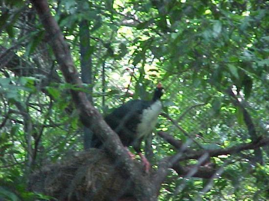 ตุซตลากูตีเอร์เรซ, เม็กซิโก: Zoológico Chiapas