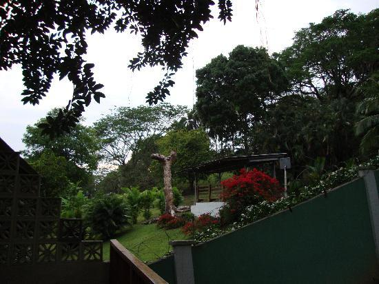 Dos Palmitos: From the back deck