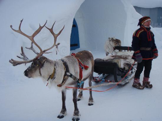 Kakslauttanen Arctic Resort: Wedding transport