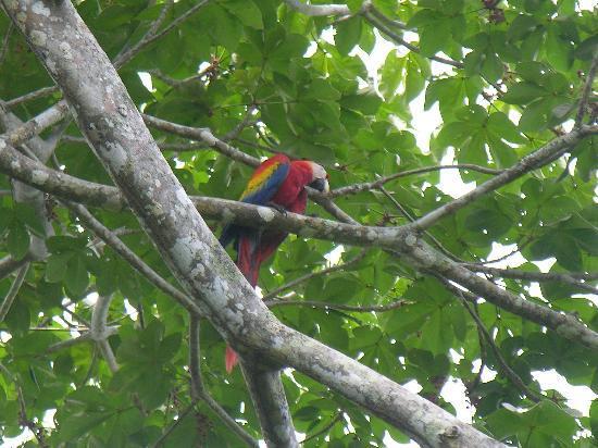 Crocodile Bay Resort: Macaw