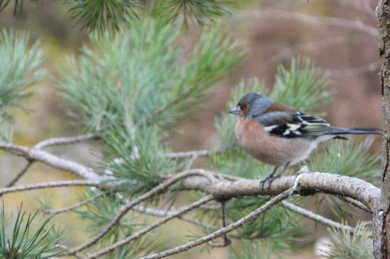 RSPB Loch Garten: Small bird in RSPB reserve