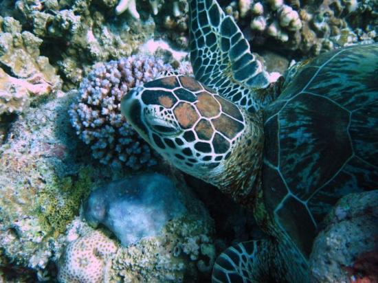 시파단 섬 이미지