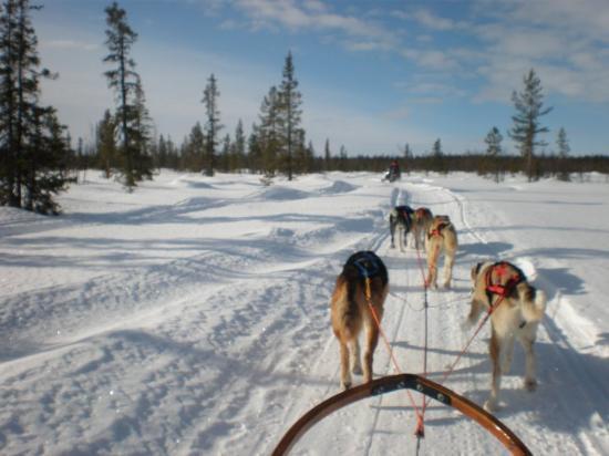 Kiruna, Zweden: Trineo por Laponia
