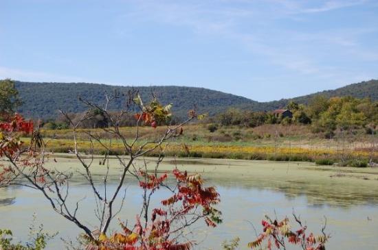Lowe 39 S Pond Big Flats Picture Of Corning Finger Lakes Tripadvisor