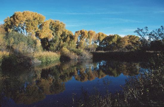 Hassayampa River Preserve: Preserve in the Fall