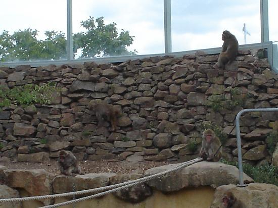Hotel Launceston: Monkeys in tha park