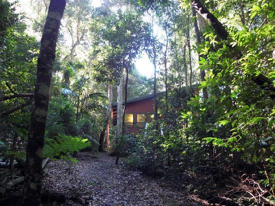 "Springbrook Lyrebird Retreat: The ""Pitta"" cabin seen from below the front deck"
