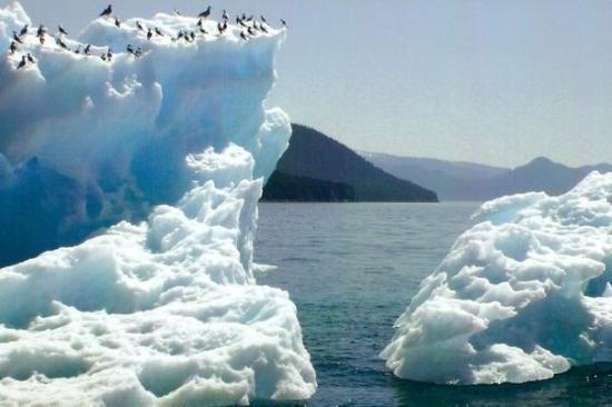 Juneau, AK: icebergs