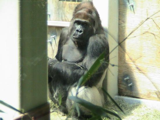 Zoo Knoxville Photo