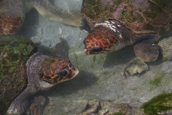 Miami Seaquarium: Turtles