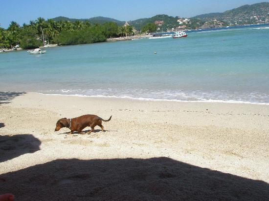 Playa Las Gatas : a local searching for food
