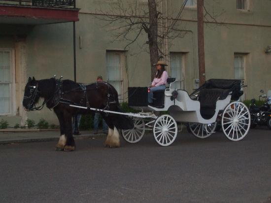 The Carriage House Bed and Breakfast: Carriage ride with Leisl