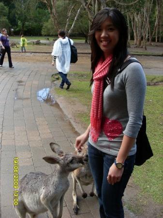 Currumbin, Australia: Captain Kangaroo !