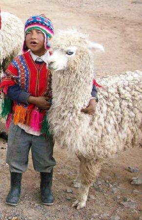 Peru: GOTTA LOVE LLAMAS